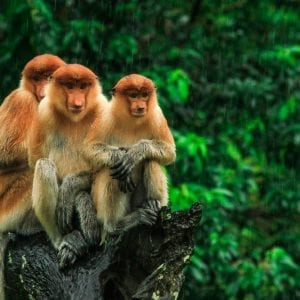 16 day best of borneo tour