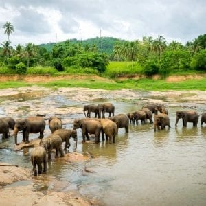 Pinnawela Sri Lanka Tour MyHoliday2