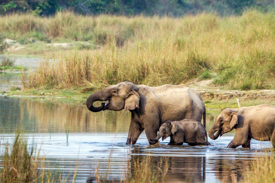 Chitwan national park MyHoliday2 Nepal Tour