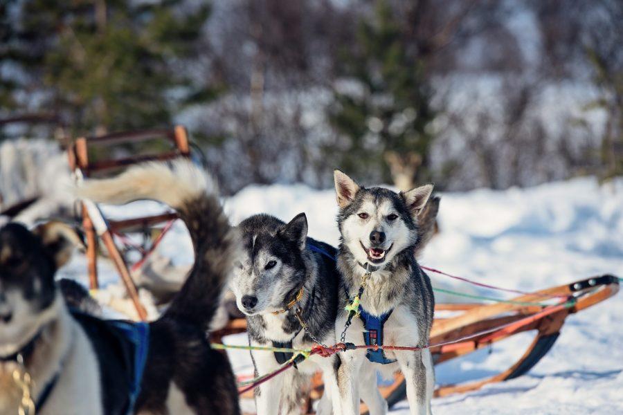 Dog-sledding-Coastal-Expedition-Norway-HGR-136538_1920- Photo_Agurtxane_Concellon
