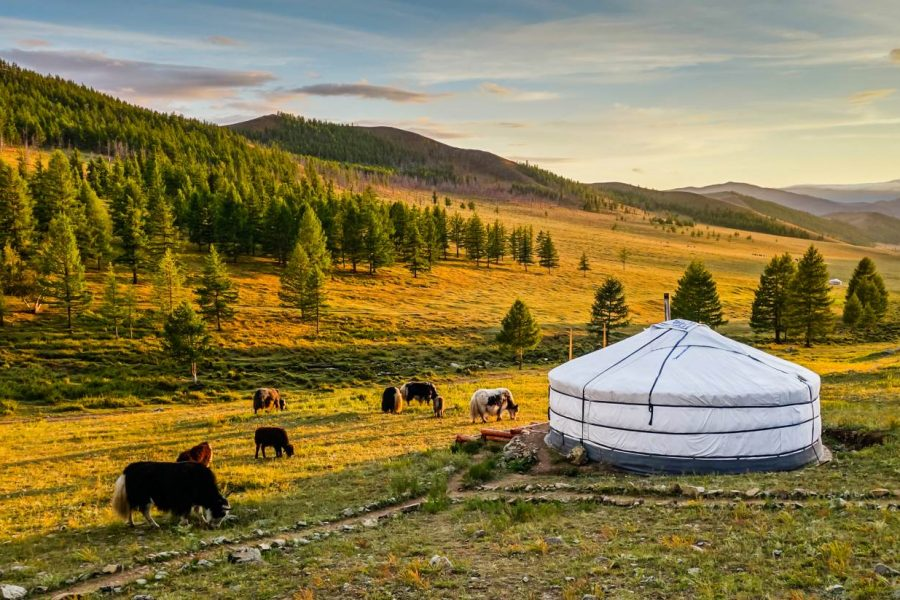 10 Day Best of Mongolia Tour MyHoliday2