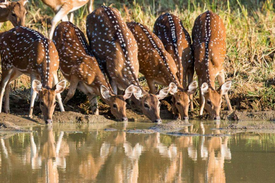 Wilpattu Park Sri Lanka MyHoliday2