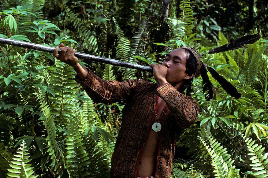 headhunter, Sarawak