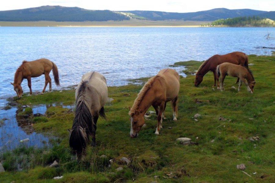 Lake in Mongolia. MyHoliday2 tours to Mongolia