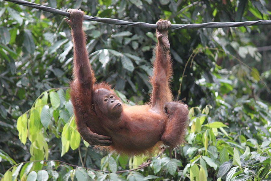 10 Day Borneo Wildlife Tour MyHoliday2