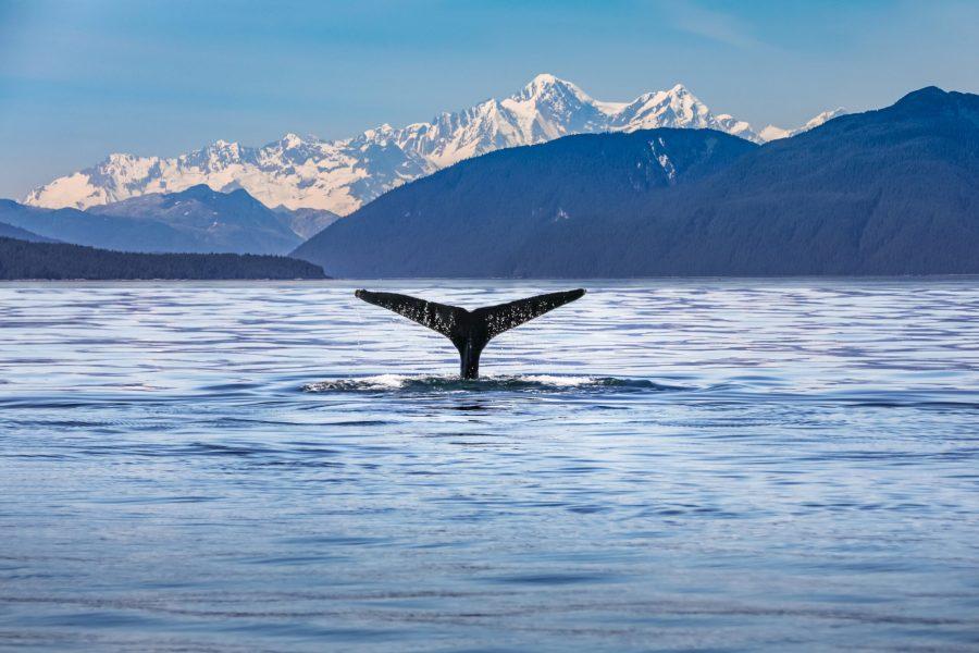 Alaska & Canada cruise MyHoliday2